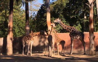 Výlet do Zoo Liberec